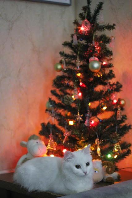О жизни: Альбом пользователя strizhi28: На звание Пушистая Мисс представляется Снегурочка