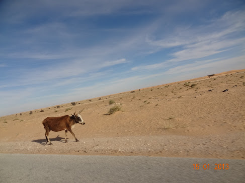 Marrocos e Mauritãnia a Queimar Pneu e Gasolina - Página 7 DSC06075