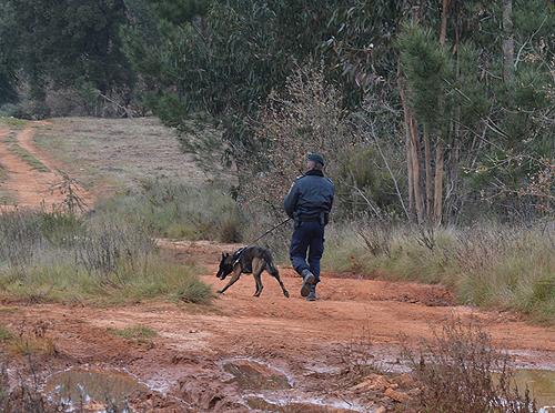 Cães foram utilizados nas buscas