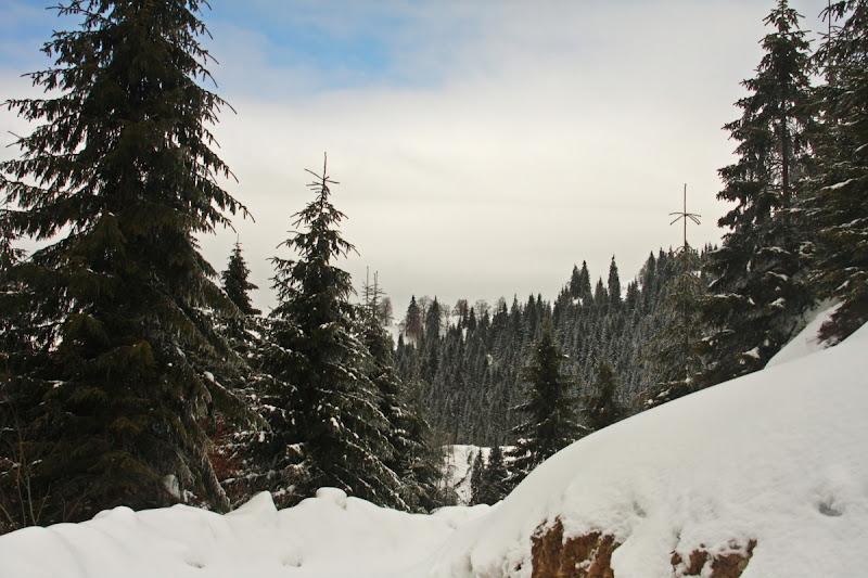 Covasna Comandau zapada brazi schi