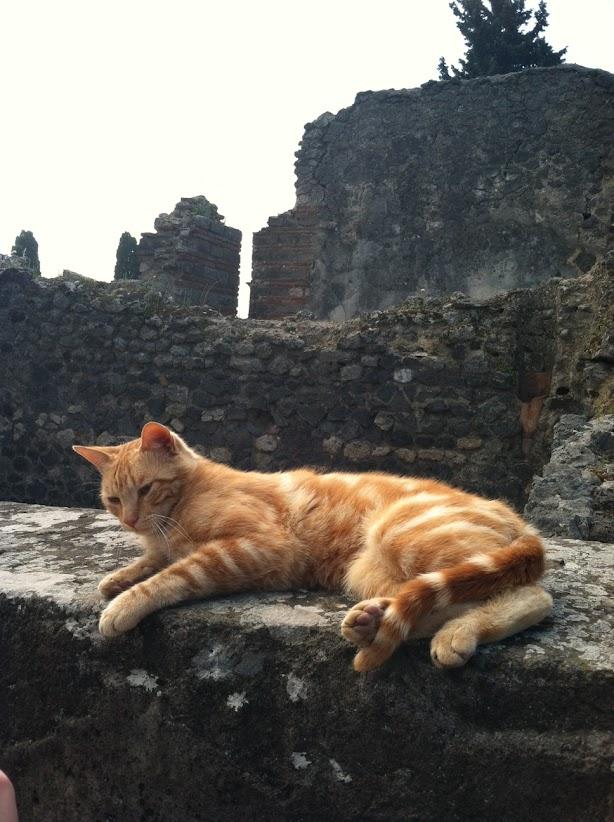 pompeiicat2