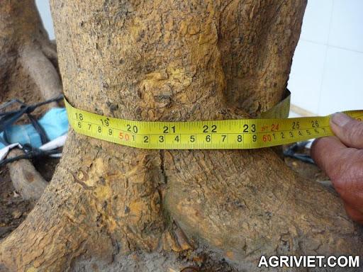 Agriviet.Com-P1030058rz.JPG