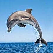 к чему снится дельфин?