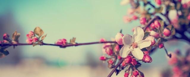 Thơ hay về mùa Xuân yêu thương