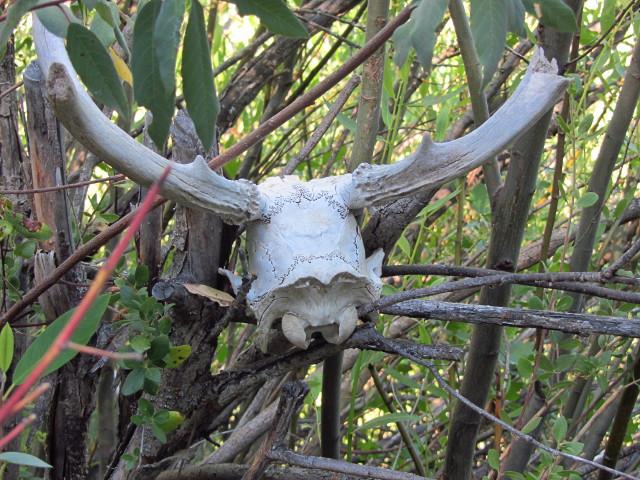 an ex-deer