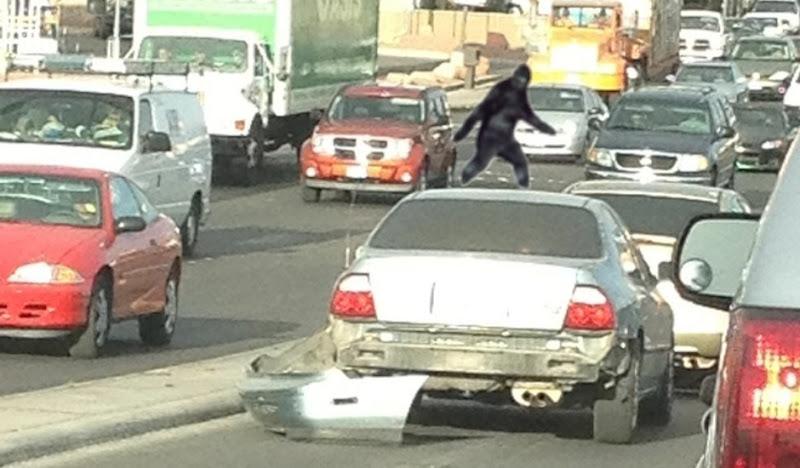 Sightings: Sasquatch on top of car in traffic