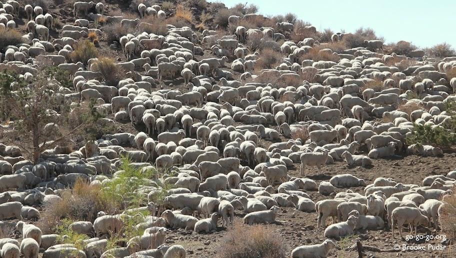 Everyday Photo: SHEEP!