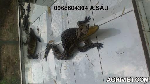 Agriviet.Com-DSC_1596.JPG