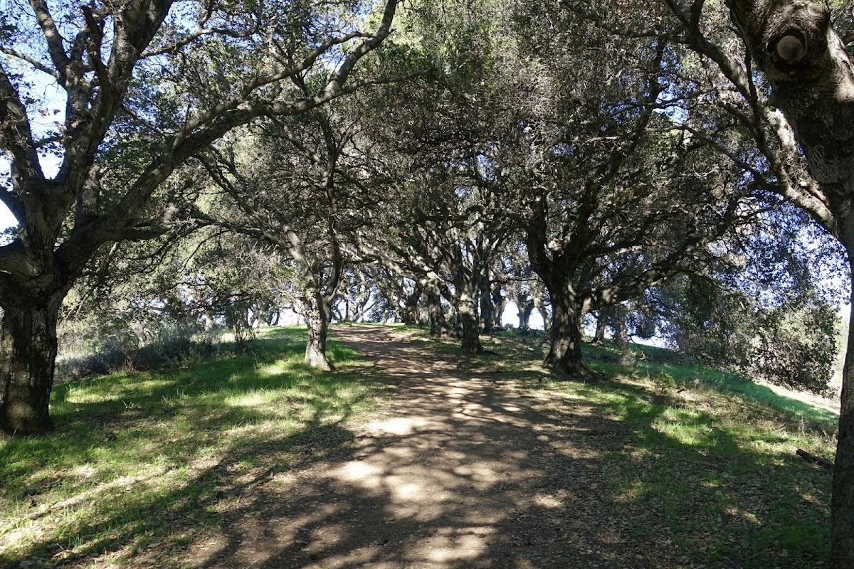 Vista trail