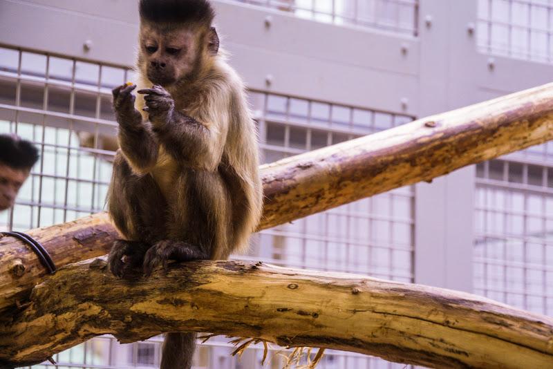 札幌 円山動物園 写真5