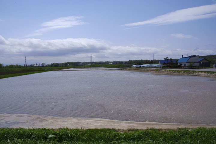 写真:田植前の圃場