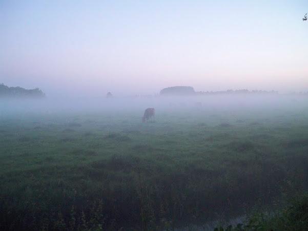 Nuit de Betuwe (NL); 110km ou 80km: 8-9/06/2012 100_6889
