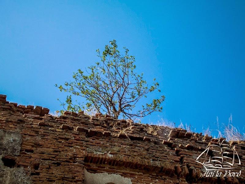 copac pe biserica gostinari