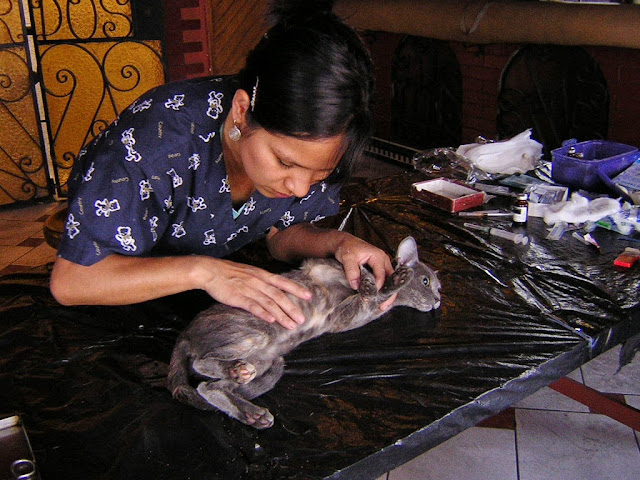 Veterinaria de VSV revisando a gatita.