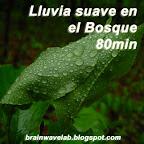 Lluvia suave en el Bosque 80min