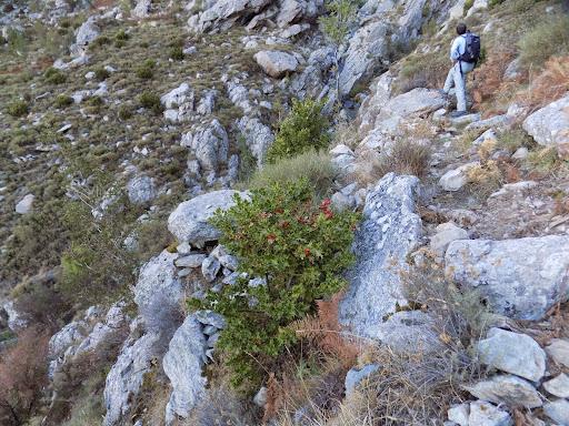 Le sentier du vallon de Tribiatoghju