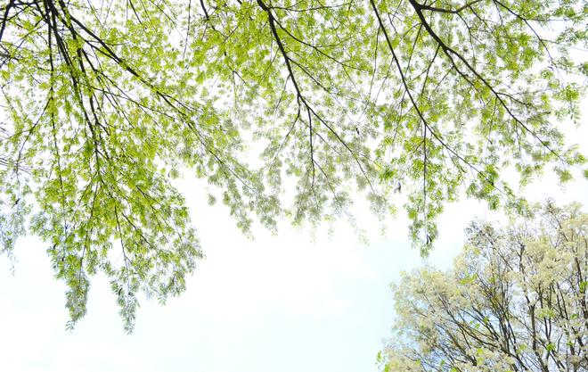 1001 bài thơ 5 chữ cuối Xuân, thơ tình giao mùa Xuân-Hạ hay