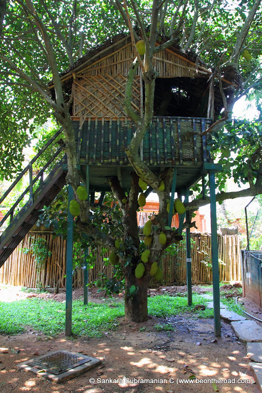 The jackfruit tree house