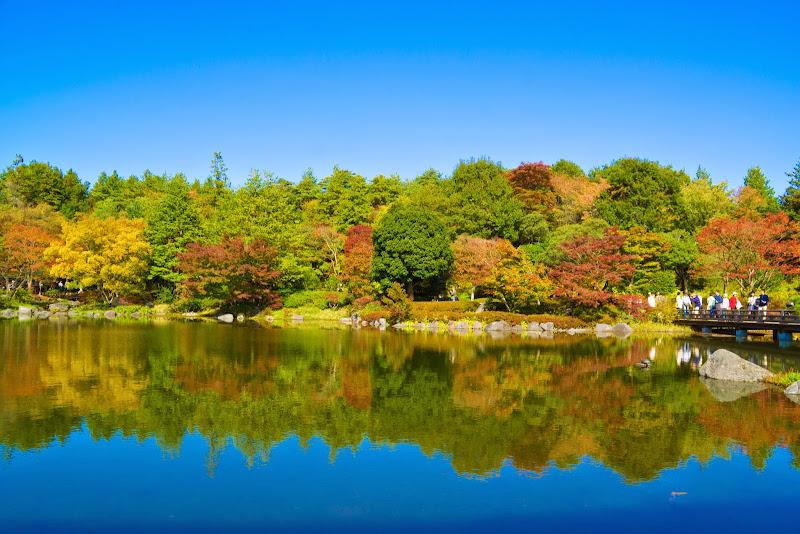 昭和記念公園 日本庭園 紅葉 写真6