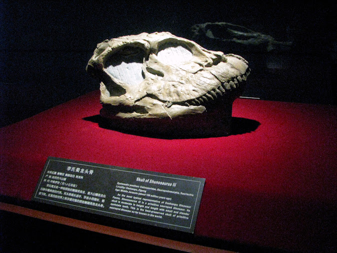 Dinosaur skull at the Zigong Dinosaur Museum