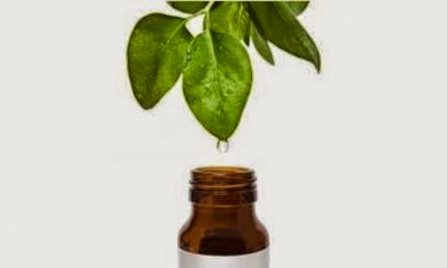 Tea Tree Oil Or Melaleuca Oil
