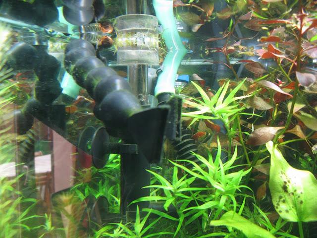 Amazonien 800 litres Aquarium-aquascaping-final21%252520%25255B1024x768%25255D