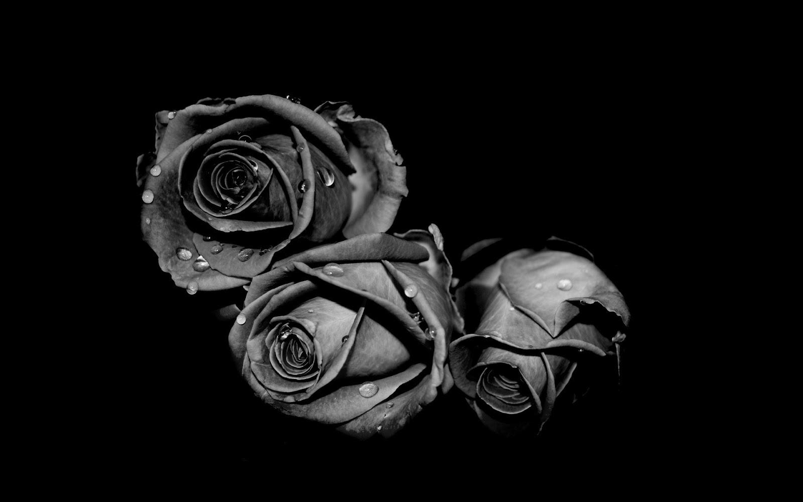 Chùm hoa hồng đen đẹp