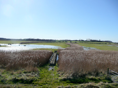 Flooded marshes at Iken