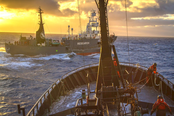 The Yushin Maru crosses bow of the Bob Barker at an unsafe distance. Photo credit: Simon Ager, Sea Shepherds Australia