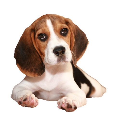 Best Beds For Beagles
