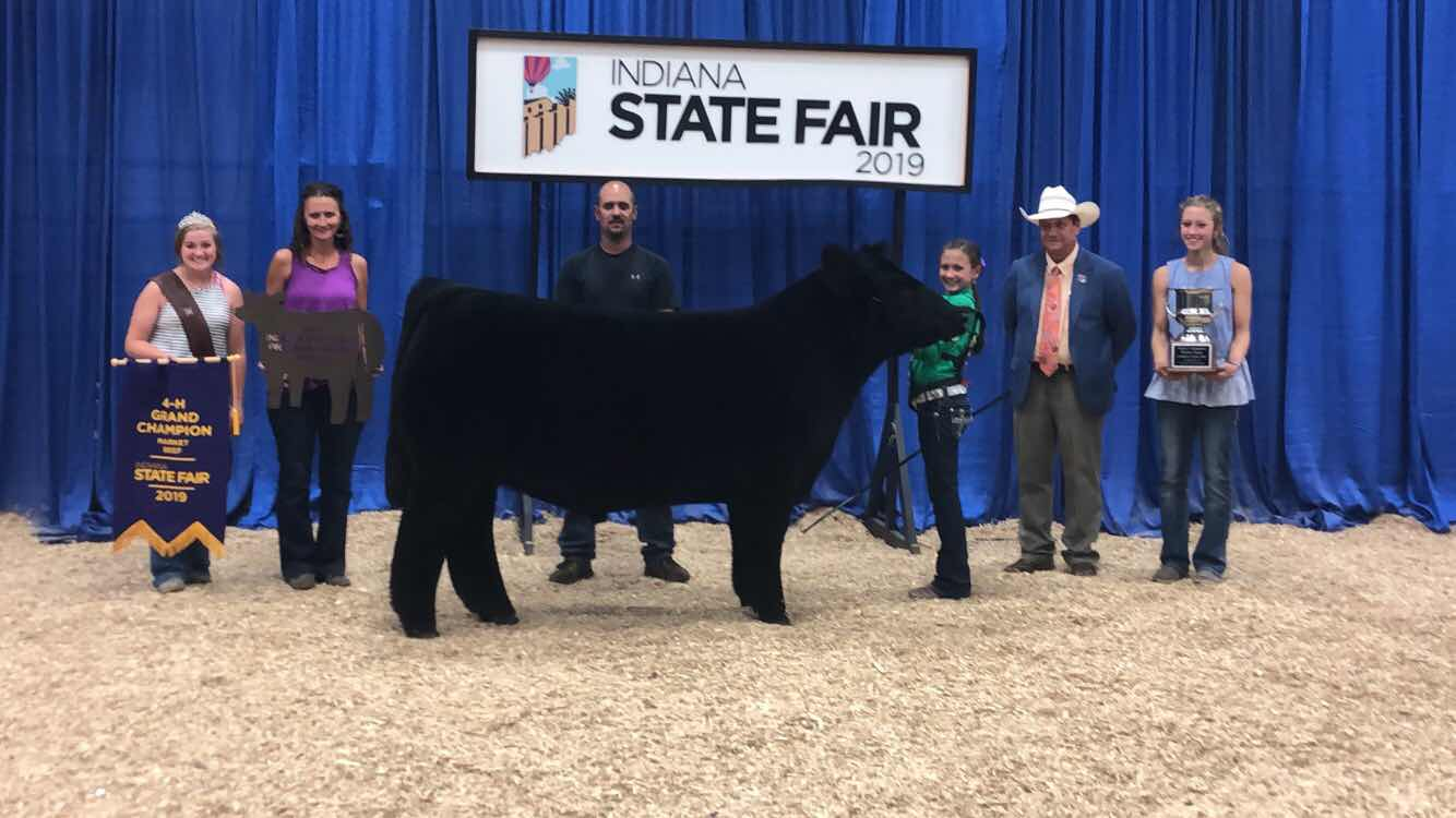 RCC Blog: Grand & Reserve Overall Steer at Indiana State Fair Sired