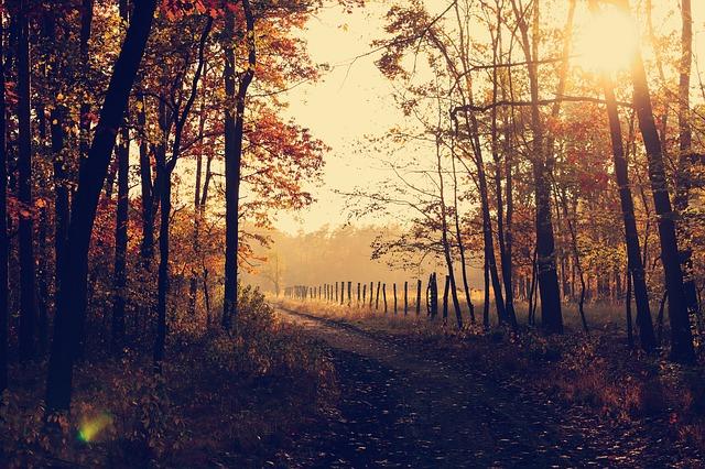 cảnh rừng Thu tuyệt đẹp với chút nắng vàng