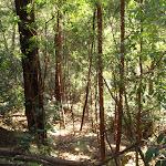 Forest near Popran creek (162043)