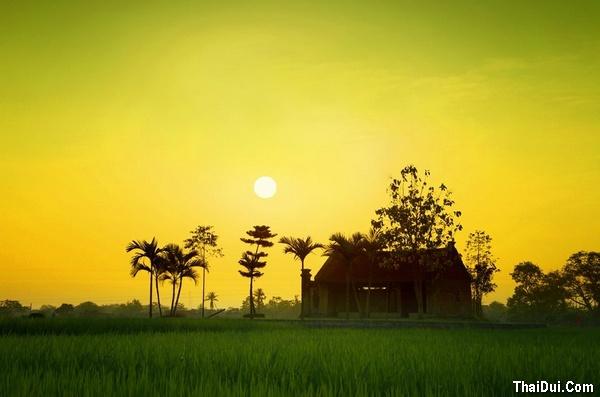 thơ cảnh làng quê với cánh đồng lúa
