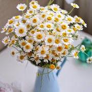 сонник сажать цветы