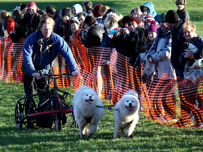 Dogs Racing at Dogmanay