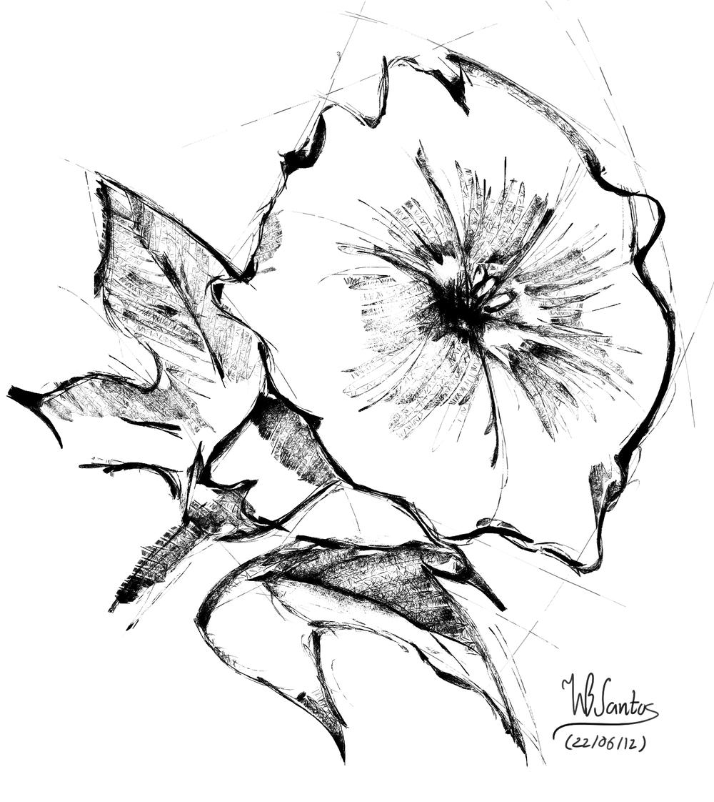 Carnation sketch, using Krita 2.5 Alpha.