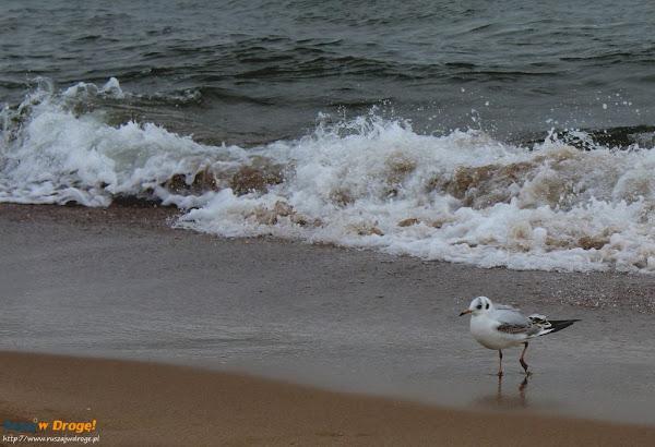 mewia modelka na plaży