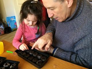 Preschooler gardening with Granddad