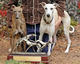 Whippet BOB - Sat. and Sun. ASFA Region 7 2011 Regional Invitational