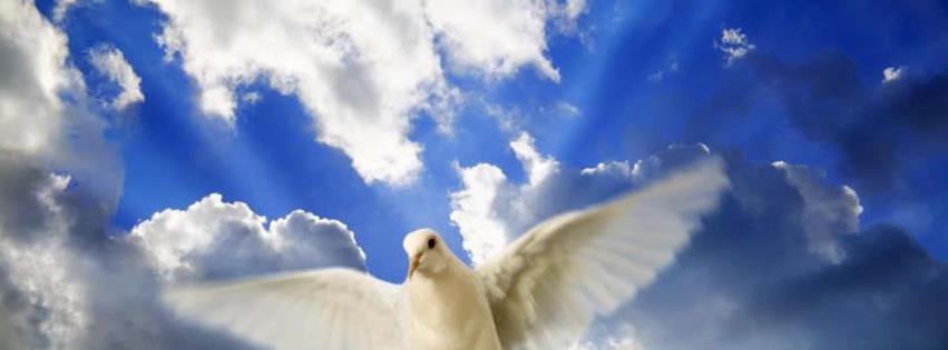 Güvercin ve gökyüzü facebook kapak fotoğrafı