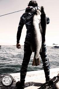 Spearfishing Bali Indonesia Barramundi, Mangrove Jack and Mullet