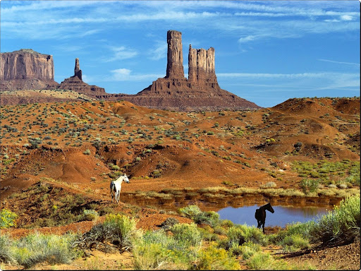 Wild Horses at the Watering Hole, Monument Valley.jpg