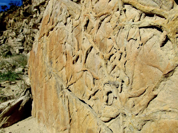 Fossilized worm burrows in a boulder