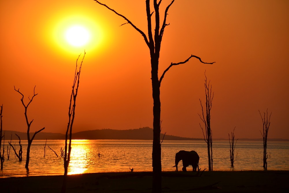 Elephant shadow with a beautiful sunset background