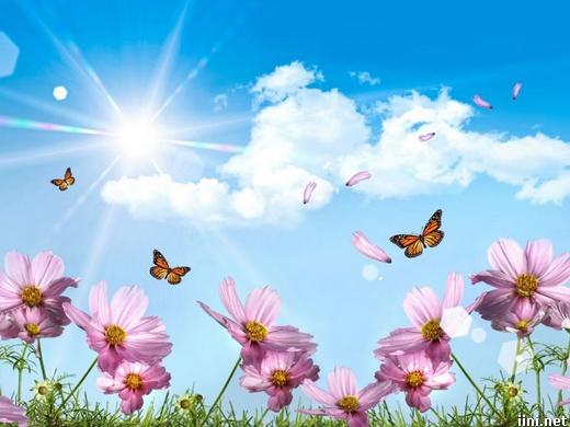 ảnh cánh bướm và hoa cỏ mùa xuân dưới ánh nắng mặt trời