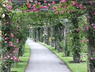 Dàn pergola với hoa hồng leo ở vườn thực vật Royal Botanical Garden (RBG) ở Hamilton, Ontario