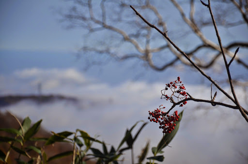 木々の隙間から見えた雲海