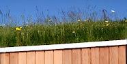 Aislamiento térmico de la cubierta verde