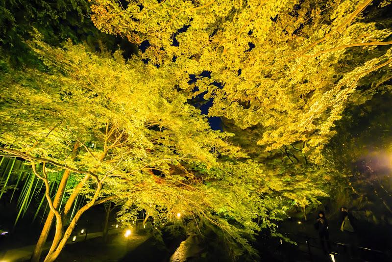 京都 紅葉 北野天満宮 ライトアップ 写真4